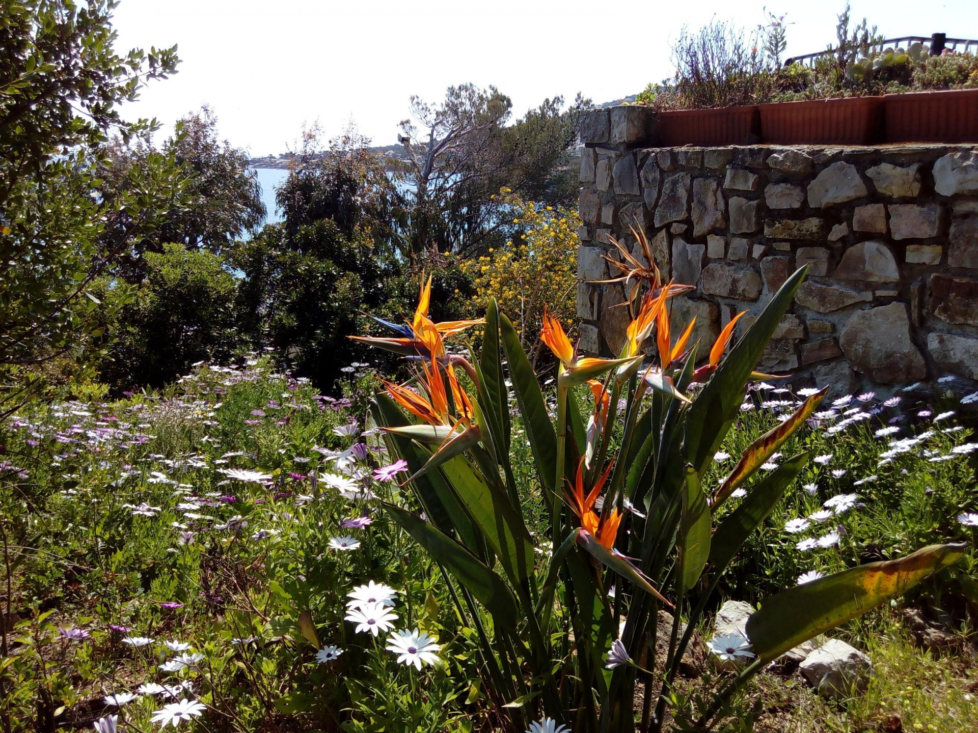 Full of flowers in the garden